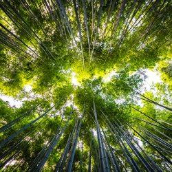 El impacto del aislamiento térmico en el medio ambiente